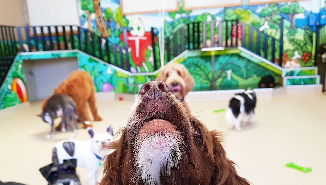 Dog Grooming Melbourne Cbd